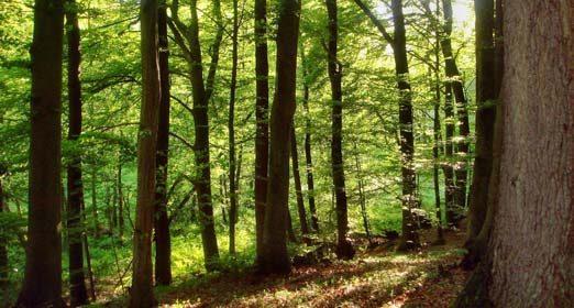 """Aktion: """"Wittenborner pflanzen Bäume"""": 27. Oktober, 15.00 Uhr"""