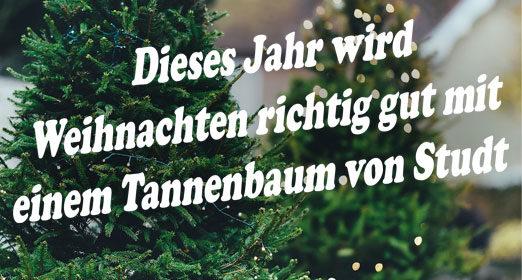 Weihnachtsbaumverkauf: ab 2. Adventswochenende, täglich von 10:00 bis 17.00 Uhr, Hof Studt in Wittenborn